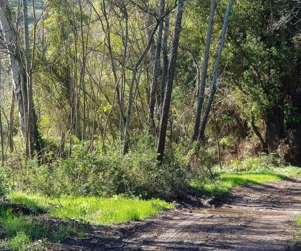 מסלול נחל גחר עליון בפארק רמת מנשה